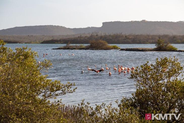 Flamingos - Curacao Kitereisen und Kitesurfen