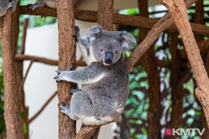 Koala Sanctuary - Brisbane Kitereisen & Kitesurfen