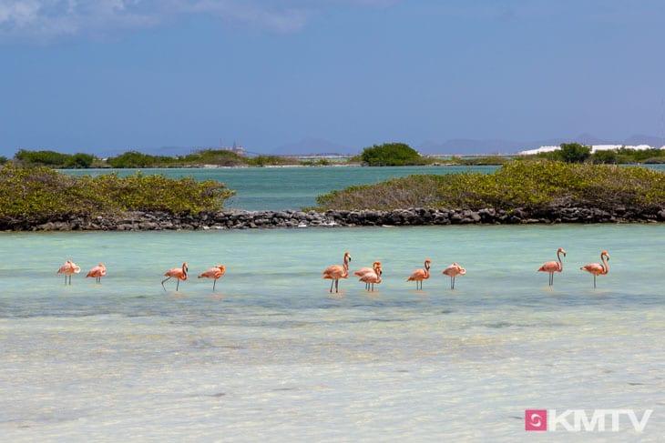 Flamingos - Bonaire Kitereisen & Kitesurfen