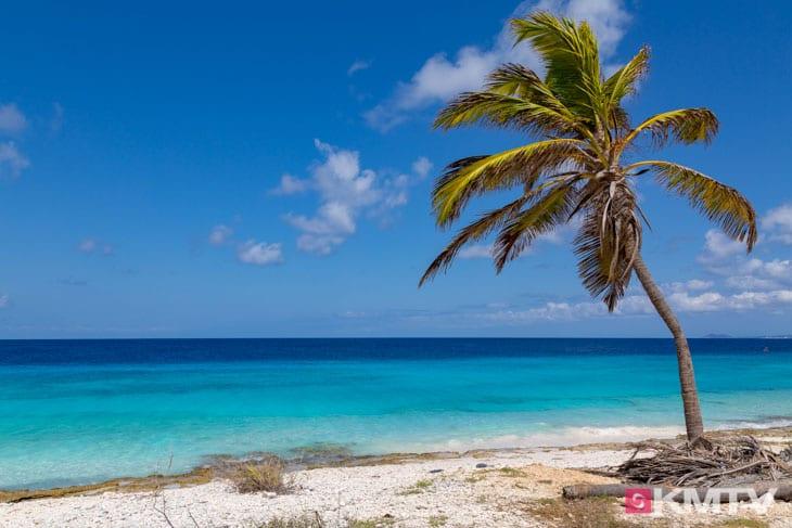 Karibik Flair - Bonaire Kitereisen & Kitesurfen